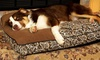Up to 57% Off a Paisley Pet Pillow