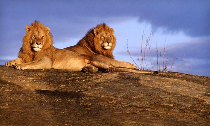 groupon deals night safari