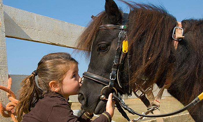 Escola de Equitação Incitatus - Valinhos: Escola de Equitação Incitatus – Valinhos: dia de recreação para 1, 2 ou 4 crianças, a partir de R$ 79,90