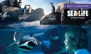 SEA LIFE Scheveningen: Ticket für einen Erwachsenen oder ein Kind für das SEA LIFE Scheveningen (bis zu 40% sparen*)