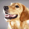 Up to 55% Off Dog Grooming in Mt. Juliet