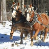 Up to 54% Off Horse-Drawn Sleigh or Wagon Ride