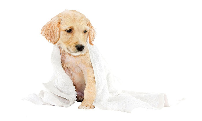 Earth Pet - Earth Pet: One or Three 30-Minute Self-Service Dog Washes at Earth Pet (Up to 55% Off)