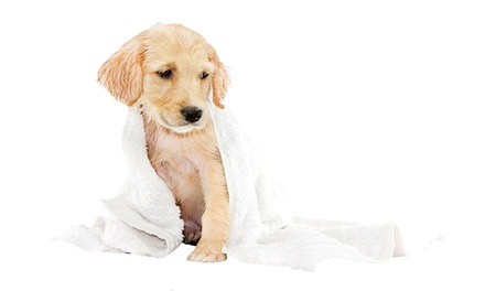One or Three 30-Minute Self-Service Dog Washes at Earth Pet (Up to 55% Off)