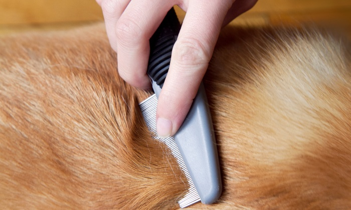 Pets Playground Grooming - Pompano Beach: $15 for $30 Worth of Services at Pets Playground Grooming