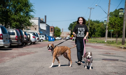 10 Dog Walks from Kanine Krewe Premier Dog Walking (53% Off)
