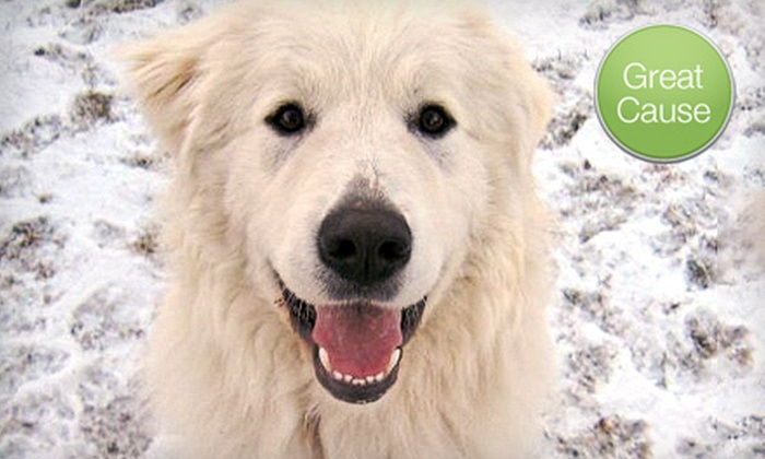 Big Dogs Huge Paws - Denver: If 40 People Donate $10, Then Big Dogs Huge Paws Can Provide 10 Giant-Breed Dogs with Pet Food for One Month