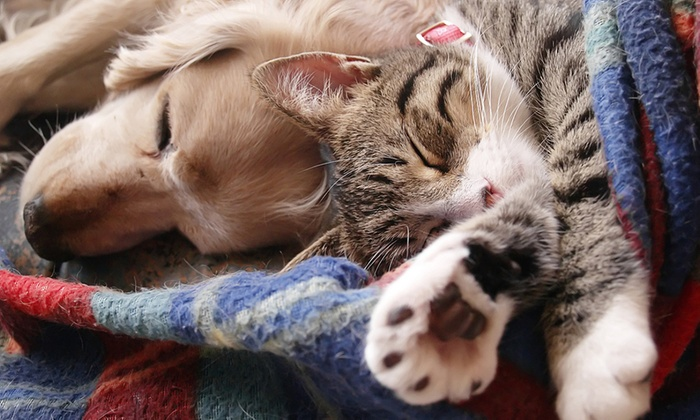 Tender Touch Small Animal Hospital - Downtown Redmond: $29 for an Office Visit and Exam for a Dog or Cat at Tender Touch Small Animal Hospital ($60 Value)
