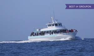 Sea Goddess Whale Watching: Up to 24% Off Whale Watching at Sea Goddess Whale Watching