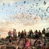 Up to 54% Off Frio Bat Flight Tour