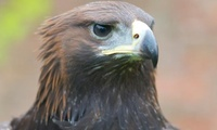 Hawk Walk, Half- or Full-Day Falconry Experience for One, Two or Four at York Bird of Prey Centre (Up to 57% Off)