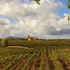 51% Off Wine Tour and Tasting at Lorimar Vineyards and Winery