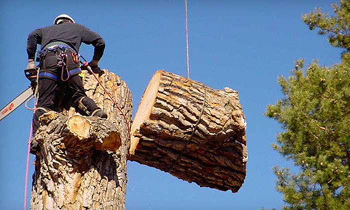 Urban Forest Pro - Richmond: $75 for Up to Three Man Hours of Tree Services from Urban Forest Pro (Up to $225 Value)