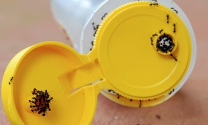 Orgreenx: Interior-and-Exterior Pest-Control Treatment, Fire-Ant Removal, or Both from Orgreenx (Up to 56% Off)