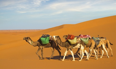 Morning Desert Safari from AED 175 with Desert Tours (Up to 55% Off)