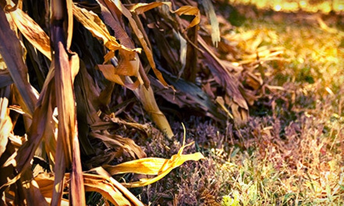 Howell Farm Corn Maze - Hopewell: Howell Farm Corn Maze for Two or Four (Up to 53% Off)