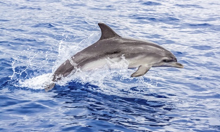 Dolphin SightSeeing Tour for Two, Four, or Six at SaltWater Savages (Up to 61% Off)
