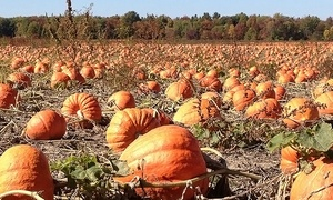 Fawns Fall Fest & Pumpkin Farm: Regular or VIP Admission for One, Two, or Four at Fawns Fall Fest & Pumpkin Farm (Up to 44% Off)