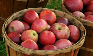 Spicer Brothers Produce: $6 for $12 Worth ofProduce and Natural Foodsat Spicer Brothers Produce