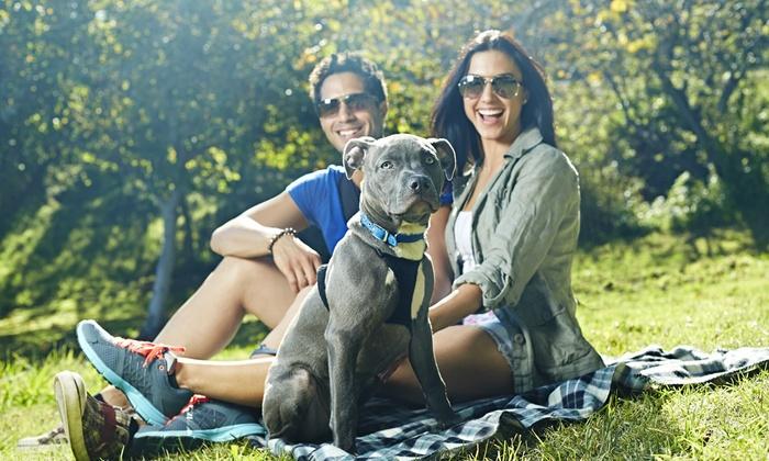 Dog Training By Kyley Ryan - Moon Lake Estates: $35 for $75 Worth of Services — Dog Training By Kyley Ryan
