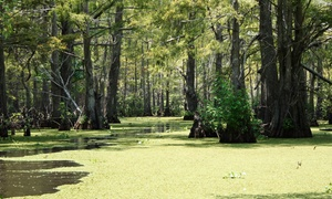 Cajun Pride Tours: $22 for a Swamp Tour via Boat for Two from Cajun Pride Tours (Up to $48 Value)