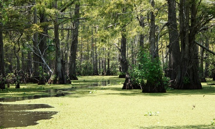 $22 for a Swamp Tour via Boat for Two from Cajun Pride Tours (Up to $48 Value)