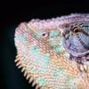 $7 for Reptile-Zoo Visit at Reptilia in Vaughan