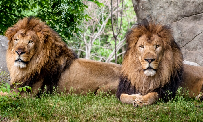 Zoo New England - Multiple Locations: Admission Package to the Franklin Park Zoo or Stone Zoo (Up to 48% Off)