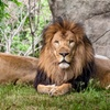 Zoo New England — Up to 48% Off Admission Packages