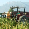 Up to 34% Off Corn Maze and Pumpkin Hayride at Black Island Farms