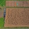 Half Off Farm Visit with Corn Mazes & Mini Pumpkins