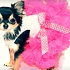 Up to 51% Off Designer Dog Clothing and Supplies