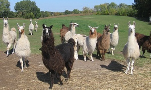 Carlson's Llama Farm: $15 for a Family Visit for Up to Six to Carlson's Llama Farm ($25 Value)