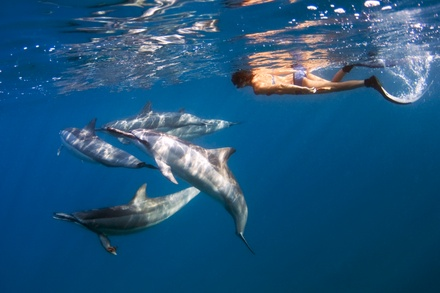 Three-Hour Manta Ray or Four-Hour Dolphin Snorkel Experience for One or Two at Ocean Encounters (Up to 15% Off)