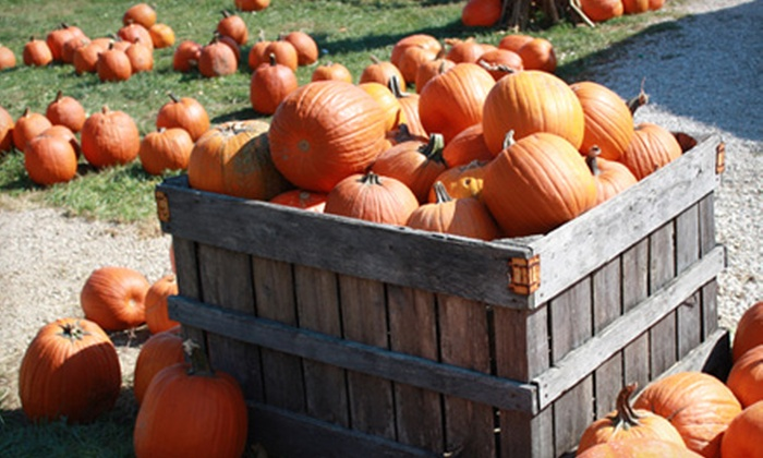 Lark Ranch - Loogootee: Pumpkin-Patch Visit for Two, Four, or Eight at Lark Ranch (Up to 56% Off)