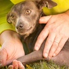 Up to 51% Off Pet Massages Sessions