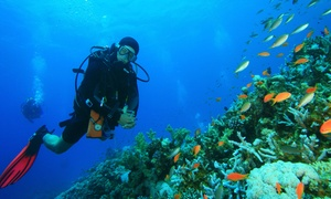 Benthic Scuba Center: Three-Hour Introductory Indoor Scuba-Diving Class for One or Two at Benthic Scuba Center (Up to 65% Off)