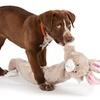 Longidudes Animal Dog Toy