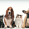 $7 for Pet Supplies at Jim Thorpe Pet Center