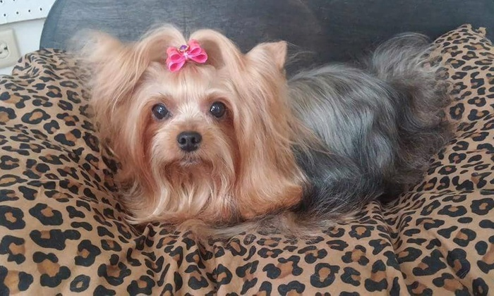 For The Love Of Dogs - Naples: $83 for $150 Worth of Pet Grooming — For The Love Of Dogs