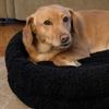 Premium Snuggle Pet Bed