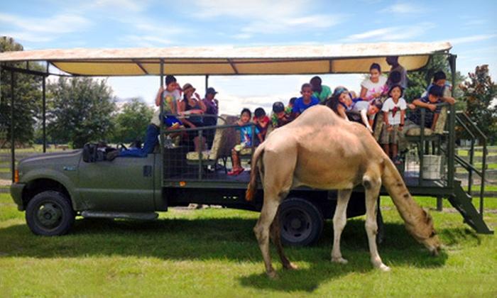 Safari Wilderness Ranch - Lakeland: Customized-Vehicle Safari or Camel Safari from Safari Wilderness Ranch (Up to Half Off)