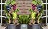 Set met 3 druivenplanten