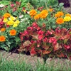 Up to 60% Off Plants or Landscaping Services