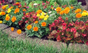 Bloom Nursery: Plants or Landscaping Services from Bloom Nursery (Up to 68% Off)