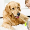Up to 55% Off Carpet Cleaning from All Star Chem-Dry