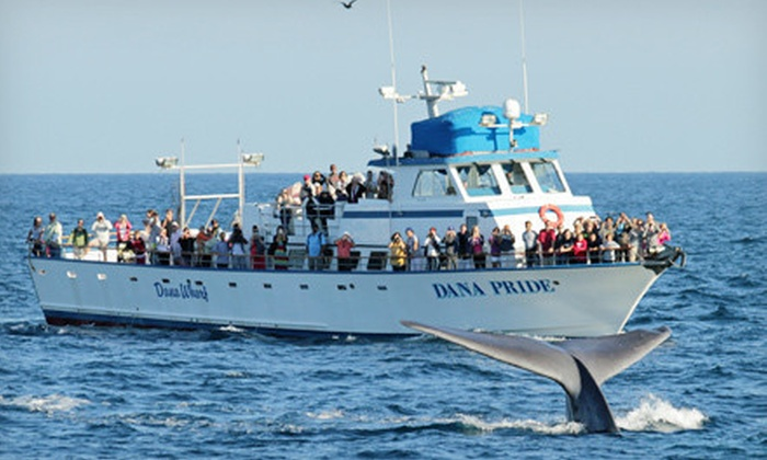 Dana Wharf Whale Watching - Dana Point: Two-Hour Evening Blue-Whale-Watching Trip from Dana Wharf Whale Watching (Up to 54% Off)