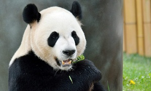 Toronto Zoo: Toronto Zoo Visit for a Senior, or Adult (Up to 46% Off)