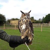 One-Hour Falconry Experience