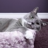 Faux-Fur Cat Cup Beds